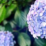 ツイッターで紹介したオススメ音楽(2017年6月分)【いい曲】