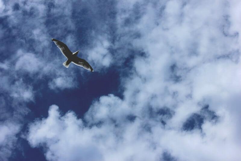 自由に飛ぶ鳥と青空