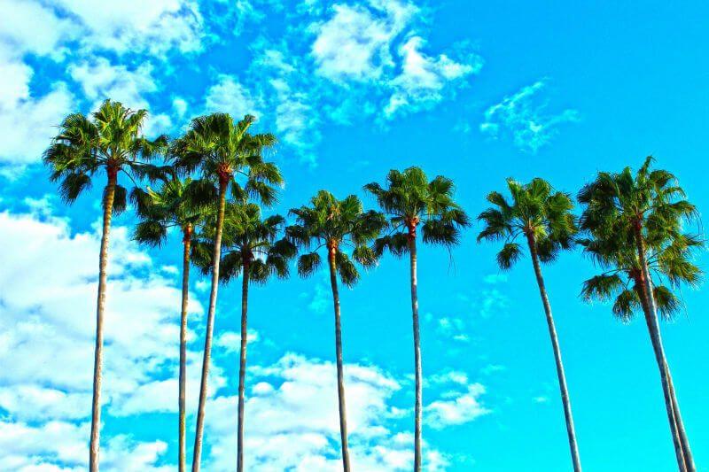 フロリダの風景